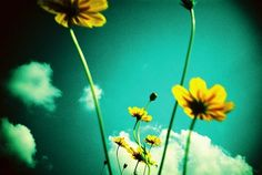 At Lomography, we absolutely love creative photography. Join our community, share your photos and read the latest photography tips and features. Photography Rules, Photography Camera, Creative Photography, Amazing Photography, Beautiful World, Beautiful Images, Pretty Pictures, Cool Photos, Pretty Pics