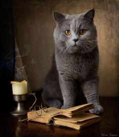 Кот учёный - Eleonora Grigorjeva - ЛенсАрт.ру