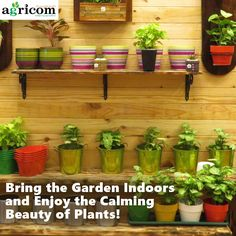 Garden Design Kerala following are some of our indoor garden works. contact us for your