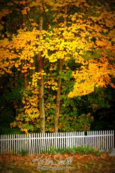 White picket fence, NH. | Flickr - Photo Sharing!