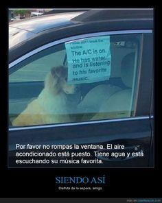 No rompas la ventana, el perro vive mejor que tú - Disfruta de la espera, amigo   Gracias a http://www.cuantarazon.com/   Si quieres leer la noticia completa visita: http://www.estoy-aburrido.com/no-rompas-la-ventana-el-perro-vive-mejor-que-tu-disfruta-de-la-espera-amigo/