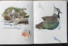 Lars Jonssons skissbok Bird Drawings, Animal Drawings, Artist Journal, Bird Art, Sketchbooks, Beautiful Birds, Painters, Watercolour, Art Projects