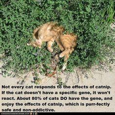 Fun Cat Facts #24