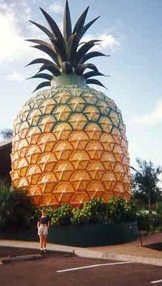 World's Largest Pineapple  Nambour, Queensland, Australia