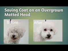 Puppy Cut Ears - Different Shapes - Do-It-Yourself Dog Grooming - YouTube