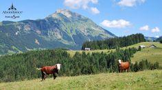 Randonnée chalets de Brion et Mont de Grange