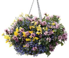 What a wonderful spring combination! via Proven Winners