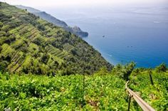 Do you like #wine ? in #Liguria we have our way to do :-) take a look! some suggestion for your staying http://www.villagiada.it/index.php?pageid=TASTE_WINE ----------------------------------------- Vi piace il #vino ? In Liguria abbiamo il nostro modo di farlo :-) date un'occhiata! Ecco anche qualche suggerimento per il vostro soggiorno http://www.villagiada.it/index.php?nuova_lingua=_ita&pageid=TASTE_WINE  #holiday #vacanze #viaggi #imperia