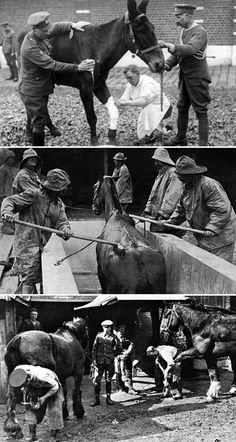 Caring for horses in WW1 - BBC site