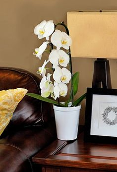 make sure the temperatures around your orchid are between  and  degrees fahrenheit in the day and  and  degrees at night: day orchid decor