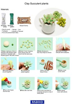 easy-stubby-fat-plants-en3
