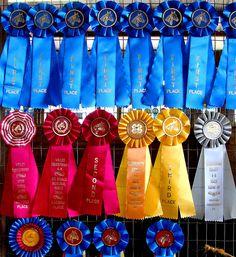 The prized ribbons won at the fair!