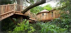 The Treehouse at Harptree Court. Amazing place to stay.