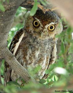 owl appreciation