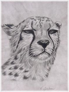 How to Draw a Cheetah   Mississippi, USA)