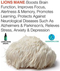 Lions Mane Is Known As The 'Smart Mushroom'. The brain boosting, hedgehog looking mushroom known as Lions Mane is often… Health Tips, Health And Wellness, Mushroom Benefits, Lion Mane, Positive Self Talk, Landing Page Creator, Brain Health, Alzheimers, Guide Book