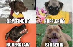 If the mascots for the Hogwarts Houses were dogs!