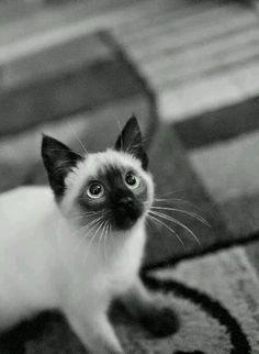 ★ Mysterious Black ★ Iiiiiit's Caturday :) :)  #caturday #lovecats #catslife