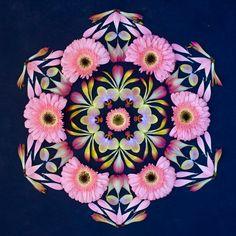 Beautiful mandala art created with fresh flowers and other organic materials, by Kathy Klein an Arizona, USA based-artist. Mandala Art, Mandala Flower, Flower Art, Flower Circle, Land Art, Simple Rangoli Designs Images, Tattoos For Women Flowers, Art Sculpture, Nature Drawing