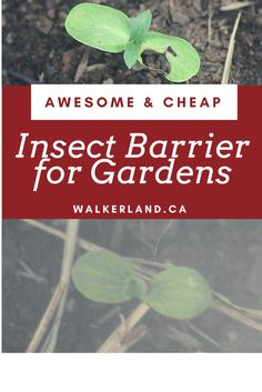 Awesome & cheap insect barrier for gardens. Learn about effective pest control that works! Organic, natural and safe.