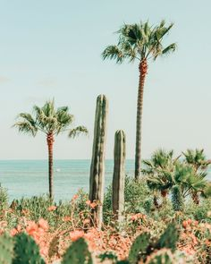 bedroom beachy Palm Trees in Summer Nature Aesthetic, Beach Aesthetic, Aesthetic Collage, Aesthetic Green, Aesthetic Bedroom, Aesthetic Grunge, Aesthetic Vintage, Aesthetic Photo, Aesthetic Fashion