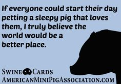 American Mini Pig Association was created to educate, advocate, protect miniature pigs, improve breeding practices. Mini Potbelly Pigs, Mini Pigs, Pig Farming, Farming Life, Pig Facts, Pig Showing, Miniature Pigs, Pot Belly Pigs, Teacup Pigs