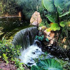 PARQUE DE LA PALOMA BENALMÁDENA 🍀🌿🌵🌴 . #parque #parques #park #parkcity #palomapark #parquedelapaloma #benalmadena #malaga #costadelsol #andalucia_photos #andalucia_natura #nature #naturephotography #naturephotograph #naturenature #incredible_europe #shot_europe