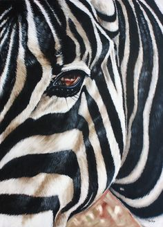 Oil painting by Ilse Kleyn; Zebra Stare www.artofkleyn.co.za Wildlife Art, Zebras, Animal Paintings, Pet Portraits, Animals And Pets, Art Projects, Character Design, Africa, Horses