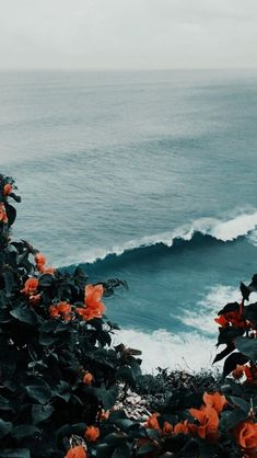 love this ocean view through the prettiest flowers