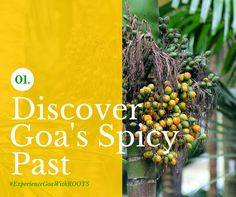 Spice Up! A visit includes a 45-minute tour of the spice plantations where you'll see cardamom, cinnamon, vanilla, pepper and cloves among other spices growing.