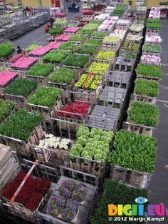 Bloemenveiling Aalsmeer Flora Holland Flower Auction