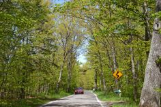 The Tunnel of Trees M119 Harbor Springs Michigan