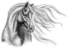 Картинки по запросу лошадь рисунок