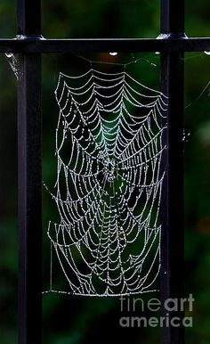 Nature's lace!
