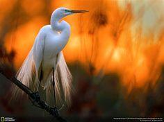 Fotógrafo de naturaleza National Geographic '16 | Diseño y Fotografía - Todo-Mail