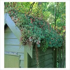 Hens & Chicks LOVE THIS! I love roof top greens. I always wonder if I can do this to my house roof!