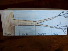 The Inspired Classroom: Limb, Branch, And Twig; A Science Foldable