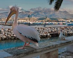 Crete Greece Islands, Crete Greece, Southern Europe, Greece Travel, Continents, Beautiful Places, Greek, Wanderlust, Africa
