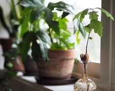 Rena luften hemma med gröna växter