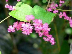 Flowers, amazon rainforest