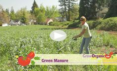 Green Manure at www.GrowOrganic.com