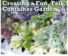 Fall container gardening is a colorful way to extend the growing season. http://www.menards.com/main/c-19120.htm?utm_source=pinterest&utm_medium=social&utm_campaign=gardencenter&utm_content=fall-container-garden&cm_mmc=pinterest-_-social-_-gardencenter-_-fall-container-garden