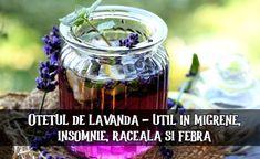 Oțetul de lavandă – util în migrene, insomnie, răceală și febră (cum să îl faci în casă) – LaTAIFAS Lavandula Angustifolia, Mason Jars, Chill Pill, Lavender, Insomnia, Mason Jar, Jars