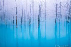 """北海道・美瑛「青い池」、Macの壁紙にも使われた""""コバルトブルーの絶景"""""""