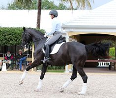 Ilse Schwarz, an Australian dressage rider married to the editor of dressage-news.com and based in Wellington, Florida, was given some private lessons by George Morris--yes, George Morris THE legend. Ilse reported her experiences in three articles for The Horse Magazine, an Australian national...
