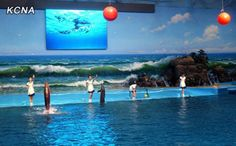 Kim Jong Un Opens High-Tech Dolphinarium While North Korea Buckles Under Floods & Food Shortages