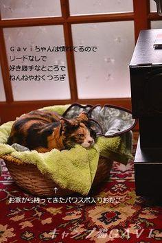 里親さんブログお年始ね、Gaviちゃんなかなかいいおねえちゃんだったりしちゃったのにゃ! - http://iyaiya.jp/cat/archives/69253