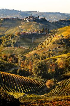 Vineyards in the hills of Tuscany, Italy