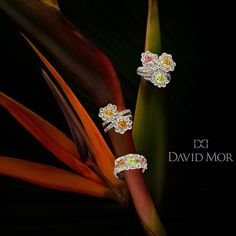 Check out more of our fancy color diamond jewelry at Luxury Las Vegas booth LUX900 and JCK Pavilion booth S10843! #DavidMorJewelry #rings #jewelry #diamonds #handmade #jewels #colors #flawless #accessories #pinkdiamond #spring #platinum #sparkle #engagement #fancy #luxury #jck2015 #love #style #precious #highjewelry #photooftheday #beauty #diamond #platinumjewelry #instajewelry #jckevents #jckluxury #luxuryjewelleryevents #luxurybyjck