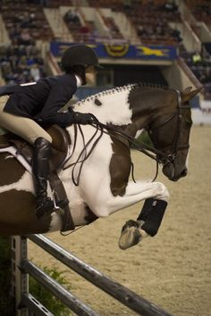 I just want a pinto colored warmblood, 17.0+ hands, that can jump 3' and higher... Is that so difficult? :-)